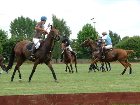 Polo in Cambridge NZ